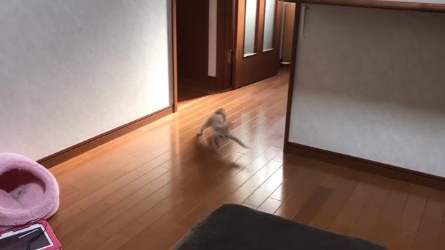 走る猫(画面中央)