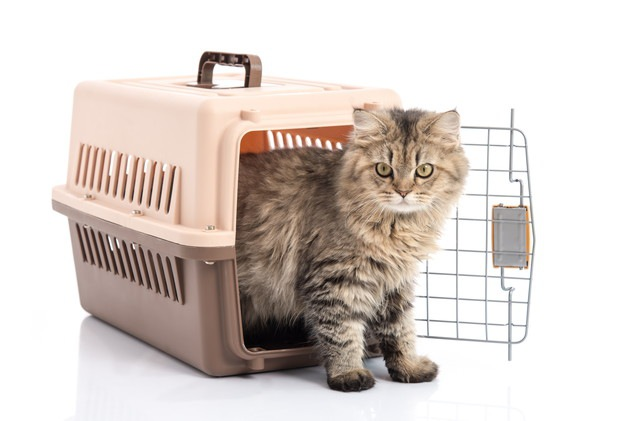 キャリーに入る猫