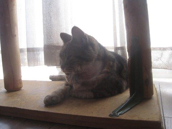床で横になってくつろぐ猫