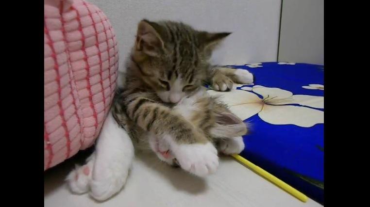 眠る子猫の顔の上に手を乗せる子猫
