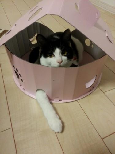 愛猫のくつろいでる写真