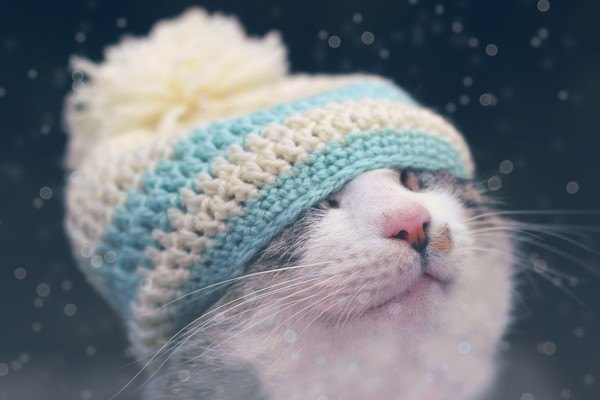 ニット帽が似合う冬の猫