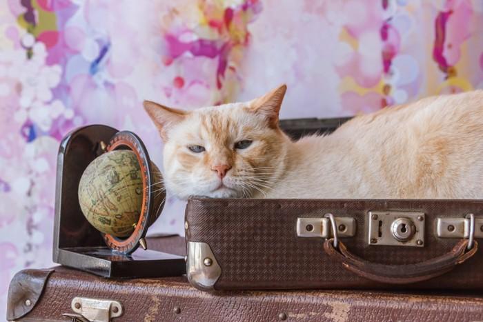 旅行鞄と猫