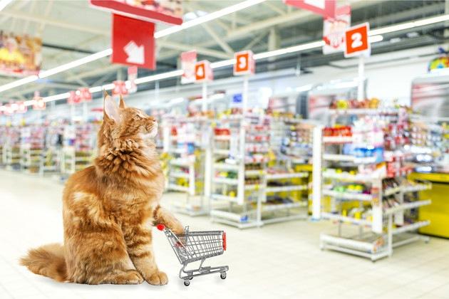 アイリスオーヤマの商品と猫