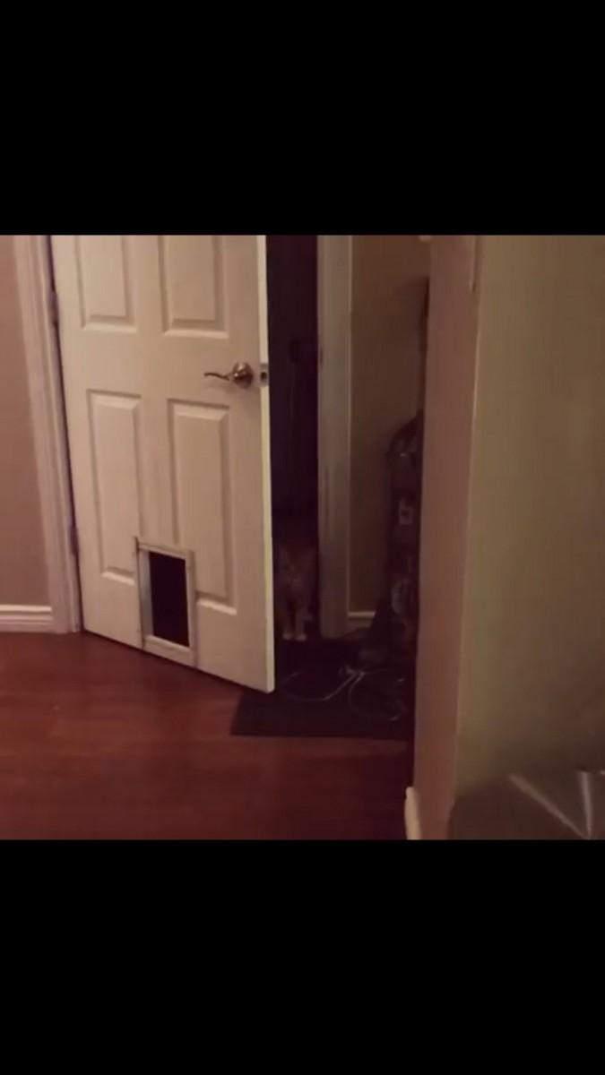 ドアが開き猫ちゃん登場