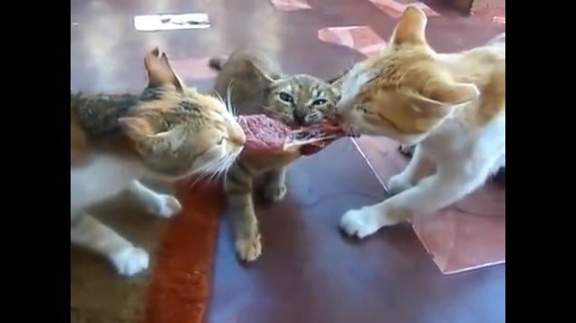 肉を引っ張り合う3匹の猫