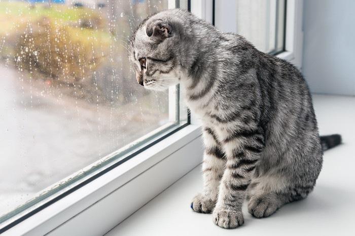 雨が降る外を窓から見る猫