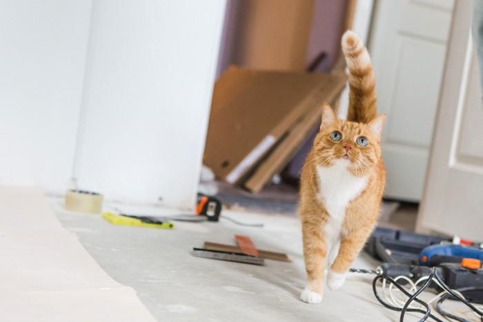 工事中の場所に来る猫