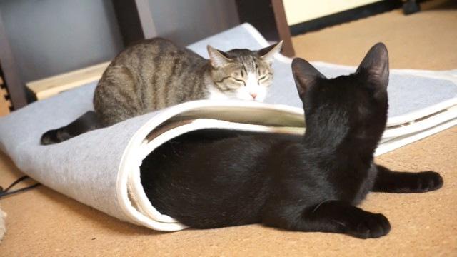起こる黒猫