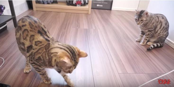 床を見る猫