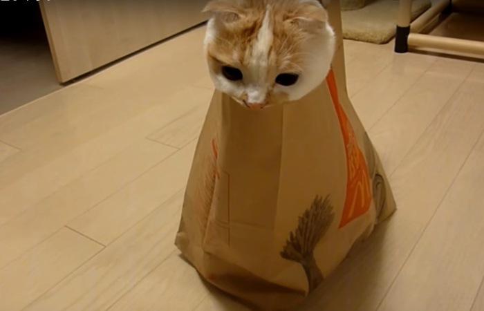 紙袋と一体化してる猫