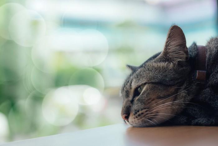 窓辺で寂しげな表情の猫