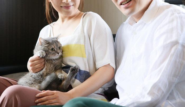 抱っこされている猫の写真