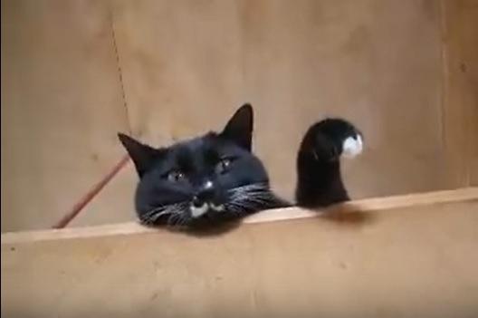 手を縮める猫