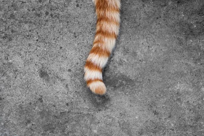 猫の鍵尻尾