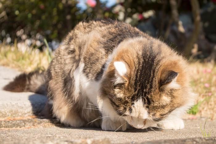 うつむきがちな猫
