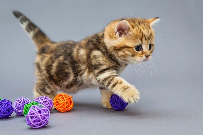 たくさんのボールと歩く子猫