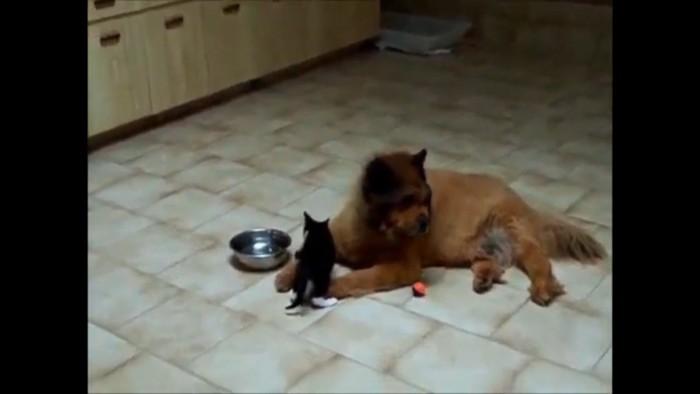 チョッカイをかける子猫
