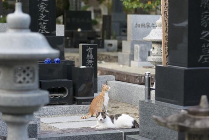 お墓にいる猫達