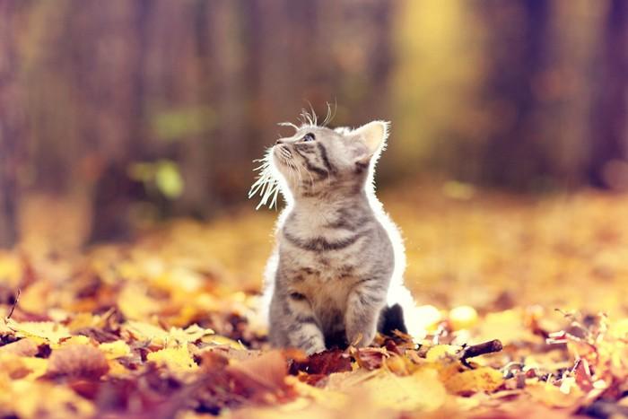 落ち葉の上に座る子猫