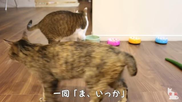 「ま、いっか」と去っていく猫達