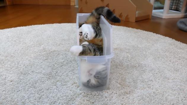 横になってプラケースに入る猫(前から撮影)