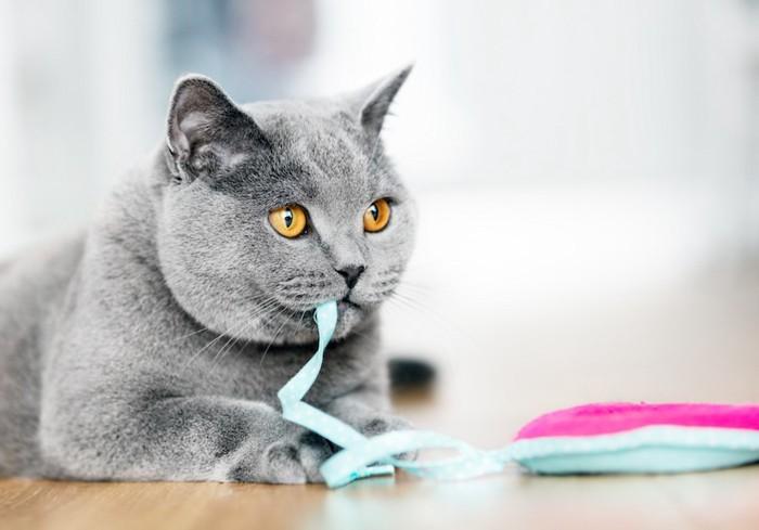 おもちゃを咥えた猫