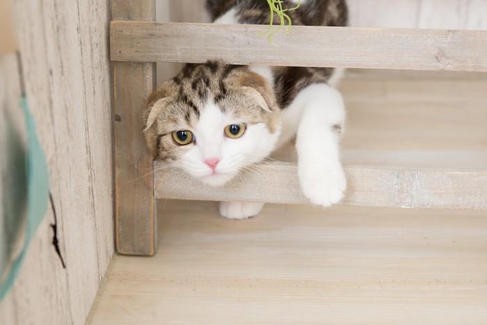家具の隙間から顔を出す猫