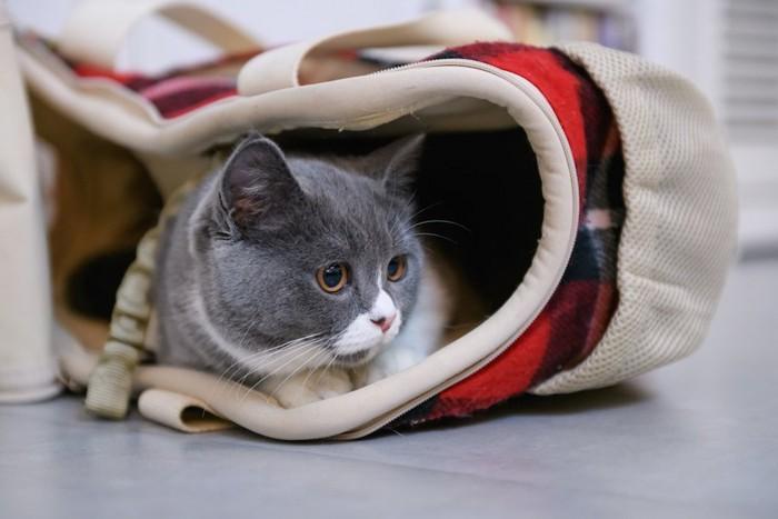 ルートートのバッグの中でくつろぐ猫