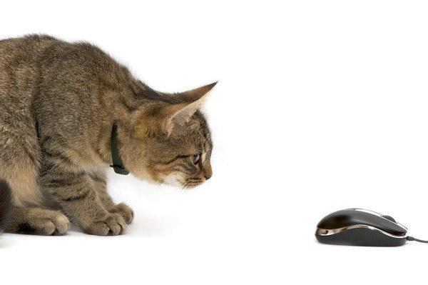 パソコンのマウスと猫