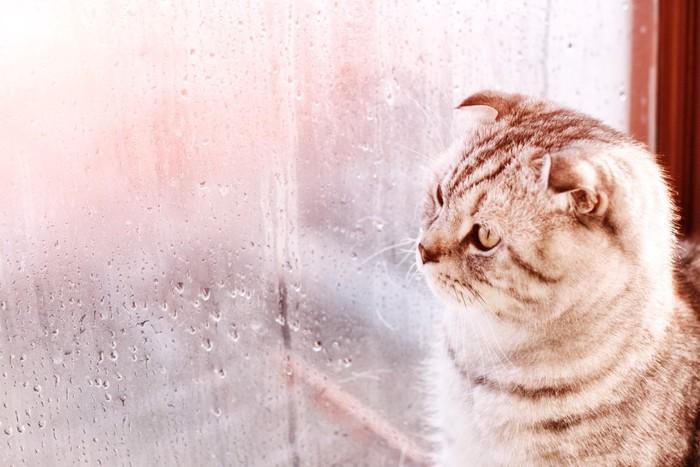 くもった窓と猫