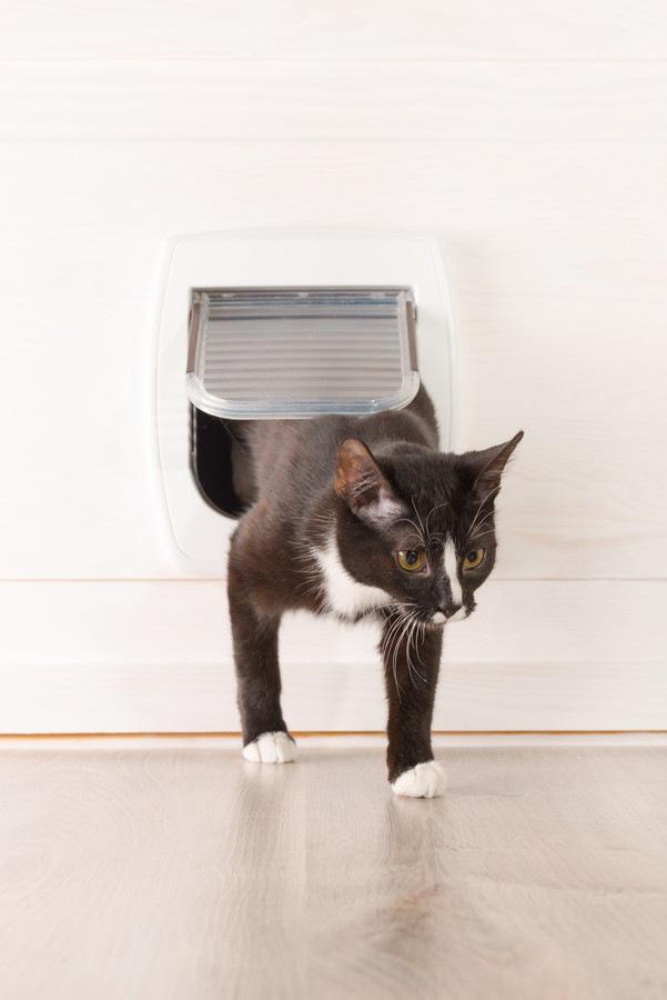 ペットドアを通っている猫