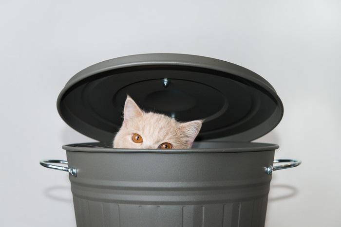 バケツに入る猫