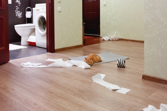 トイレットペーパーの散らかった床に伏せている猫