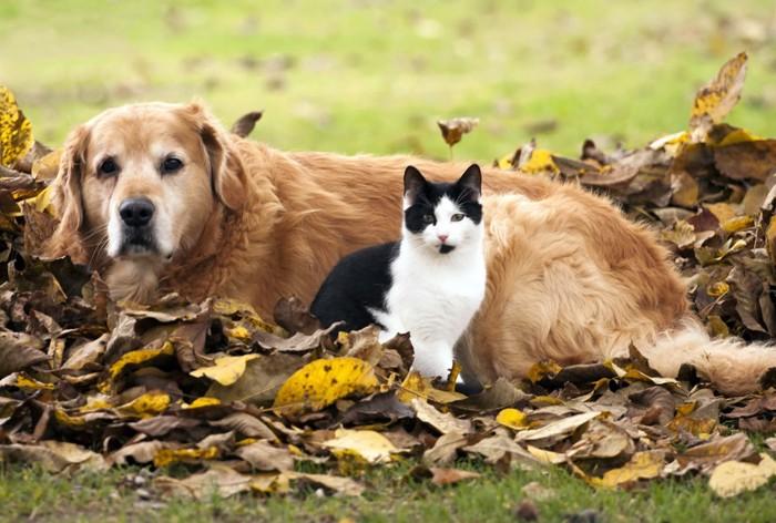 枯れ葉と犬と猫