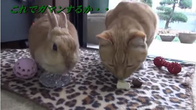 おやつに口を付ける猫