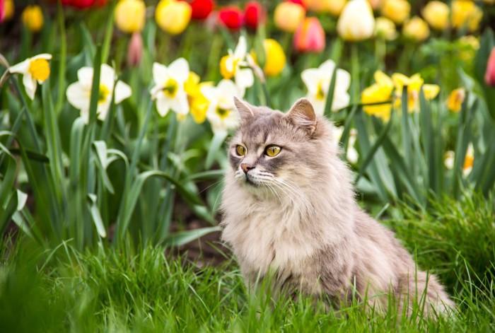 花の庭にいる猫