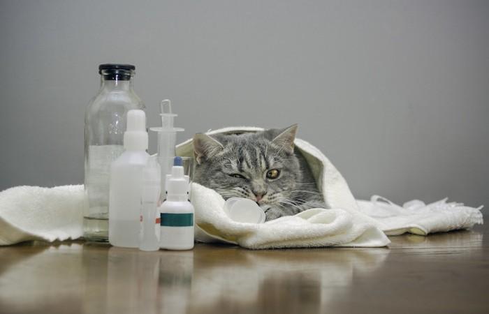 ブランケットにくるまる猫と薬