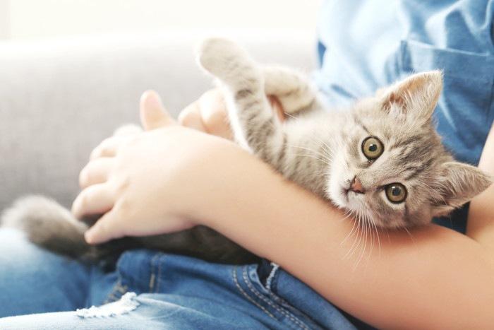 抱っこをされている猫