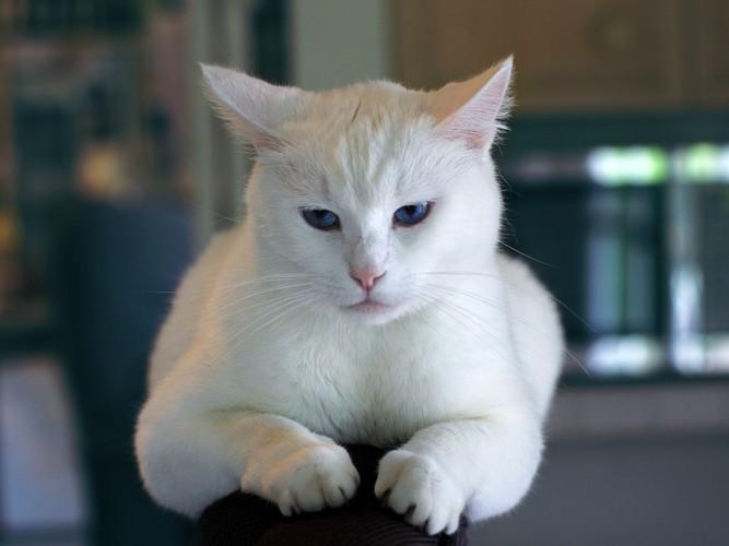 ひっそり佇む猫