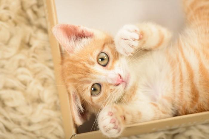 箱の中にいる子猫