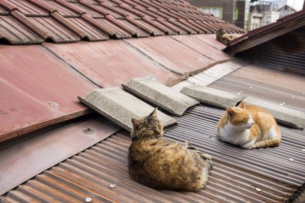 トタン屋根で香箱座りをしている猫