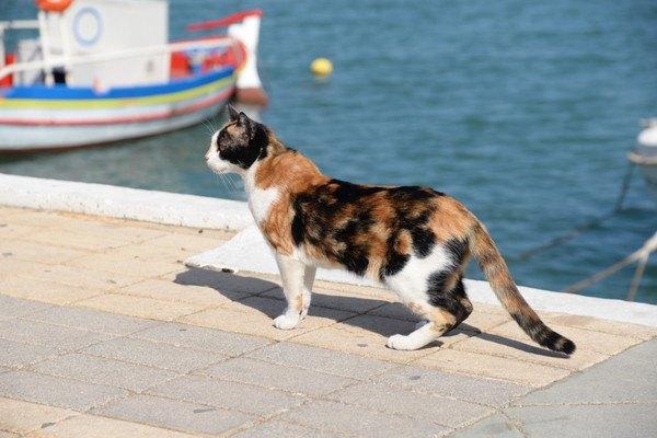 港にいる三毛猫