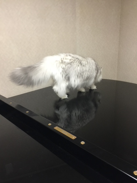 ピアノの上