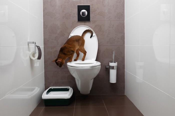 人用トイレと猫用トイレ