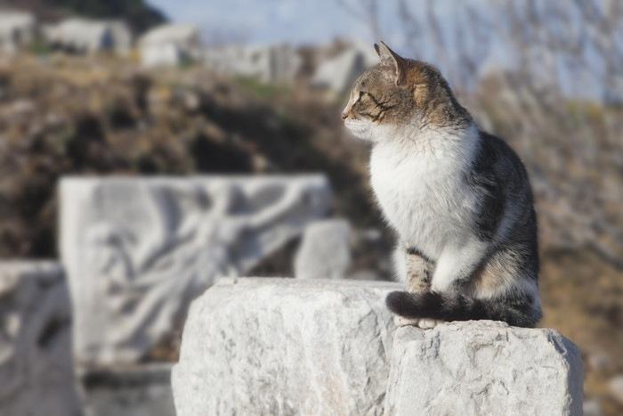 石の上でたたずむ猫