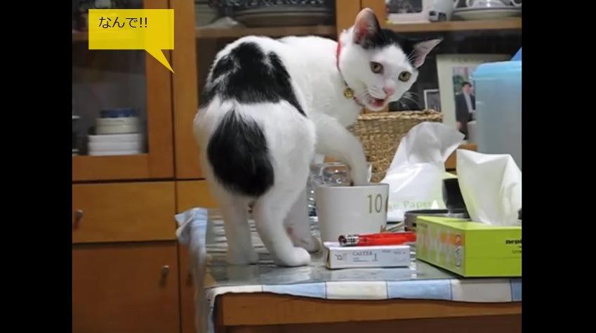 振り向いて鳴く猫