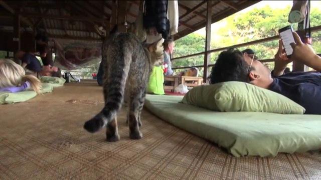 客を選ぶ猫