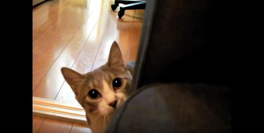 近くでこちらを見る猫