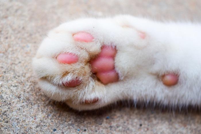 猫の手 肉球側 アップ